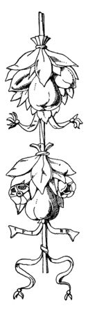 Tomb of Louis XVII Cluster is a fruit Festoon design found in St. Denis, its was during the French Renaissance, vintage line drawing or engraving illustration.