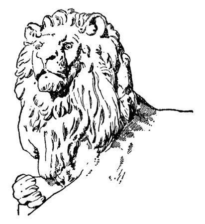 Head of Companion have lion sculpture, it is a natural design, vintage line drawing or engraving illustration. Ilustração