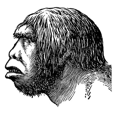 The head of a Neanderthal man during the Early Paleolithic, vintage line drawing or engraving illustration. Illusztráció