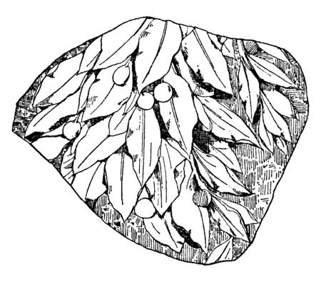 Laurel Design Fragment is a design found on a Roman marble relief, vintage line drawing or engraving illustration.