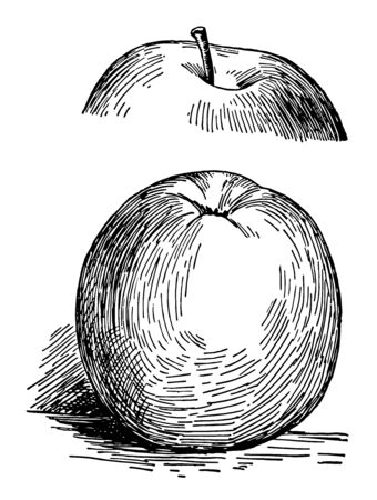In this image are a gano apple, vintage line drawing or engraving illustration.