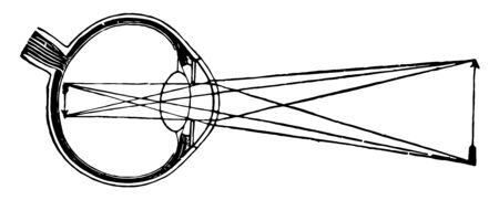 This illustration represents Image Formation in the Retina, vintage line drawing or engraving illustration. 일러스트