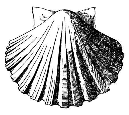 Exterior Scallop Shell was used as a water basin in the form of a shallow dish, vintage line drawing or engraving illustration.