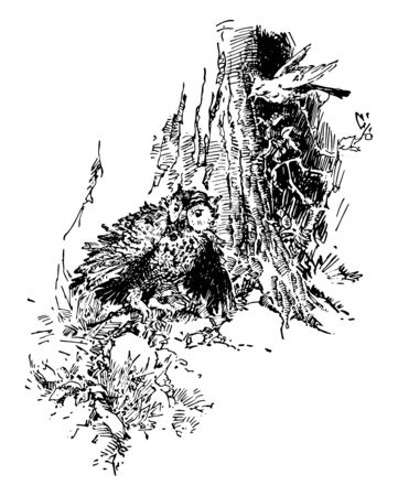 A blue jay bird on tree looking down at the owl bird and talking, vintage line drawing or engraving illustration Illustration