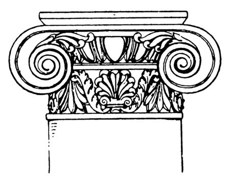 Roman-Ionic Capital,  a design of a scroll rolled on both sides,  with spiral curves, It has an added neck, decorated with a palmette ornament, vintage line drawing or engraving illustration.