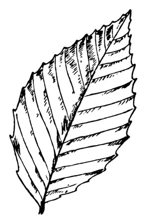 This is a leaves in the frame and it is skimpy, vintage line drawing or engraving illustration.
