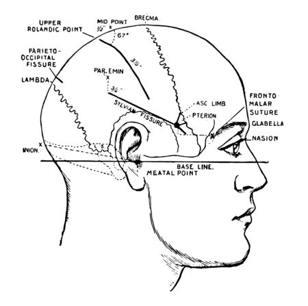 Showing the lines which indicate the position of the principal fissures of the brain, vintage line drawing or engraving illustration. Ilustração