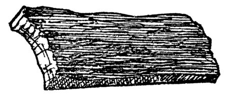 The outside covering of a tree the rind which is called as Bark. Car-painters have used the bark for making furniture & etc. things, vintage line drawing or engraving illustration.
