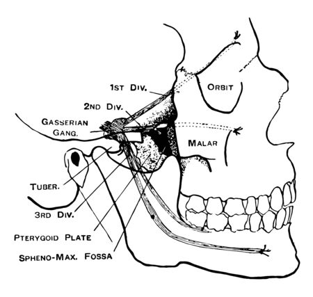 This illustration represents Facial Nerves, vintage line drawing or engraving illustration.
