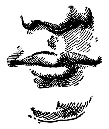 The lips nose and chin of a persons face, vintage line drawing or engraving illustration.