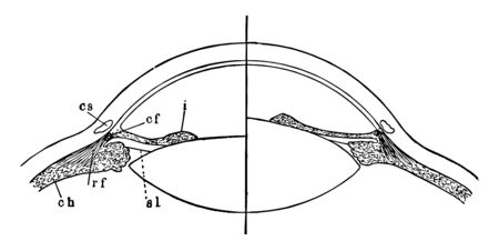 This illustration represents Focusing of the Eye, vintage line drawing or engraving illustration. Çizim