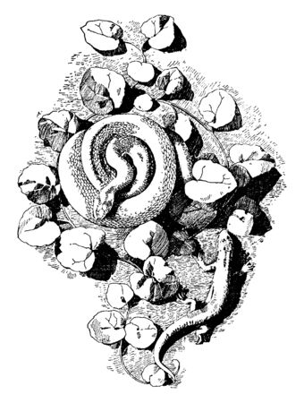 Serpent Cast a form created by both a viper and lizard, It was used for symbolic and decorative purposes, vintage line drawing or engraving illustration.