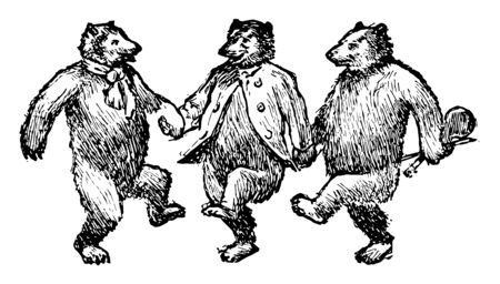 Three bears dancing, this picture shows three bears dancing together by holding hands of each other, vintage line drawing or engraving illustration