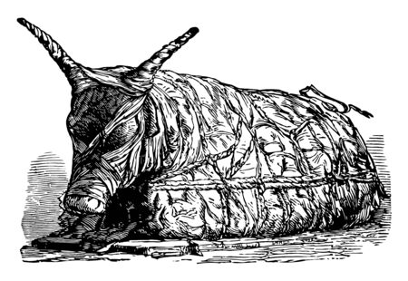 In this image a dead bull is wrapped in a fine cloth, vintage line drawing or engraving illustration.