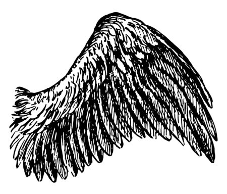 This diagram represents Bird Wing, vintage line drawing or engraving illustration.