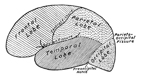 The lobes of the convex surface of the hemisphere, vintage line drawing or engraving illustration. 向量圖像