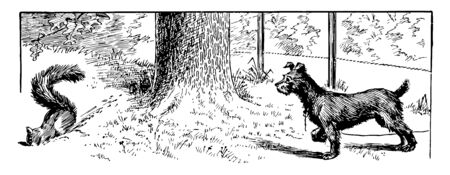 Dog and Squirrel, this scene shows a dog looking at squirrel, tree in background, vintage line drawing or engraving illustration Ilustração
