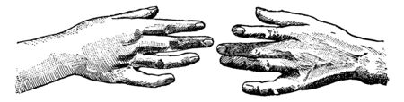 Fruit Basket made by two hands about to touch with the top of the hand facing, vintage line drawing or engraving illustration.