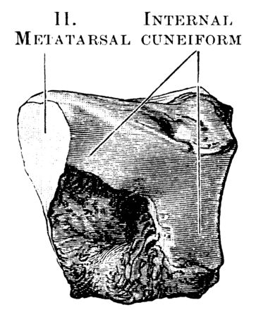 This illustration represents Middle Cuneiform, vintage line drawing or engraving illustration. Illustration