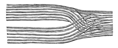This illustration represents Nerve Filaments, vintage line drawing or engraving illustration.