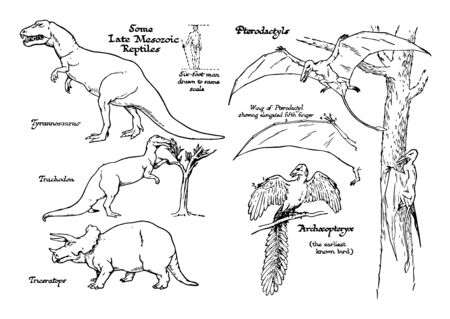 This illustration represents Late Mesozoic Age Reptiles, vintage line drawing or engraving illustration.