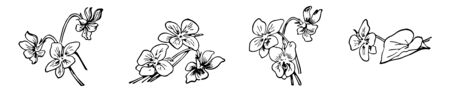 This cards has flowers. 10 Flowers are grouped into 4 part. 3 groups of 3 flowers and one flower kept aside, Vintage line drawing or engraving illustration.