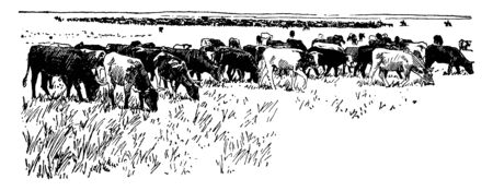 This illustration represents Cattle grazing on a plain, vintage line drawing or engraving illustration.
