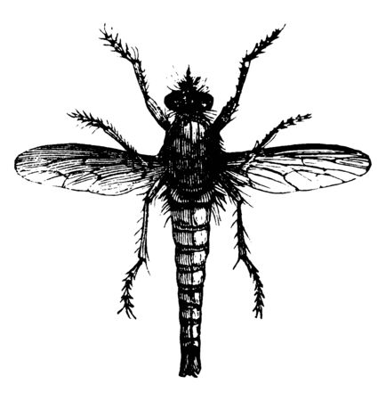 Fly Killer where a fly that eats other flies, vintage line drawing or engraving illustration.