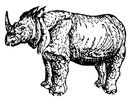 Rhinoceros is one of any five extant species of odd toed ungulates in the family Rhinocerotidae, vintage line drawing or engraving illustration.