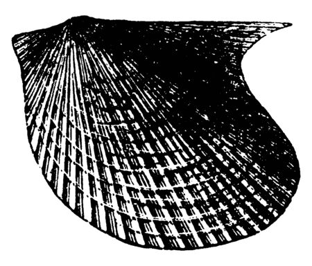 Pterinea Mollusk is radiate from the Paleozoic time, vintage line drawing or engraving illustration.