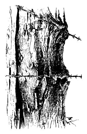 A tree trunk barbed with fencing wire, vintage line drawing or engraving illustration.