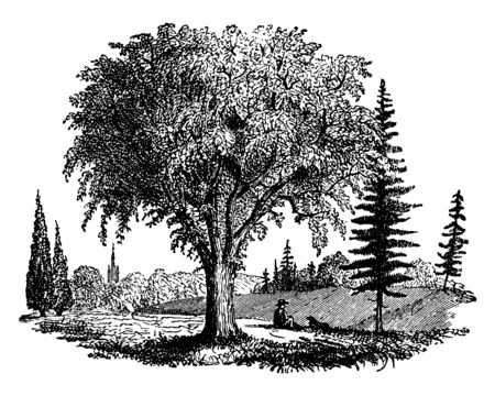 An orchard with many varieties of trees, vintage line drawing or engraving illustration.