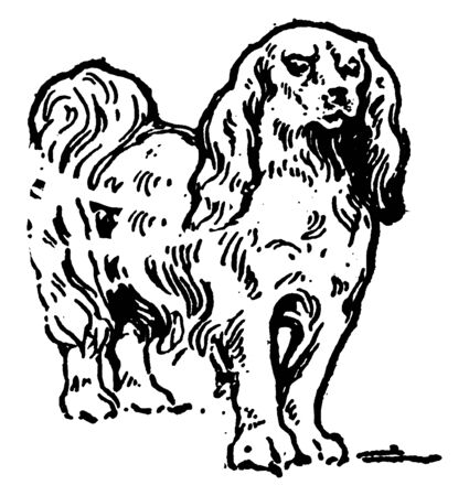 Japanese Spaniel is a dog acknowledged for its importance to Japanese nobility, vintage line drawing or engraving illustration. Illusztráció