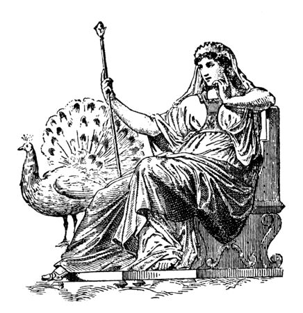 This is the picture of Hera with her peacock. In Greek mythology, she is known as the goddess of marriage and birth, vintage line drawing or engraving illustration. Illustration
