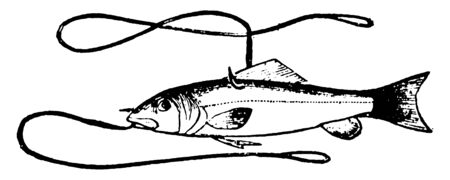 Live fish is trapped in hook. Hook is used for grab a fish, vintage line drawing or engraving illustration.