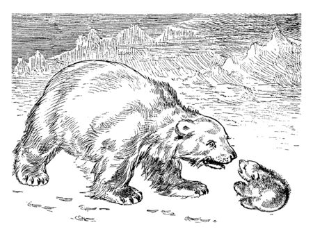 Polar Bears is a carnivorous bear whose native range lies largely within the Arctic Circle, vintage line drawing or engraving illustration. Ilustração