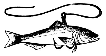 Live fish is trapped in hook, vintage line drawing or engraving illustration.