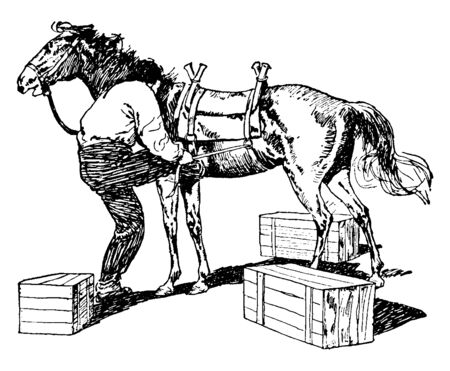 Pack Horse used to carry heavy loads, vintage line drawing or engraving illustration.