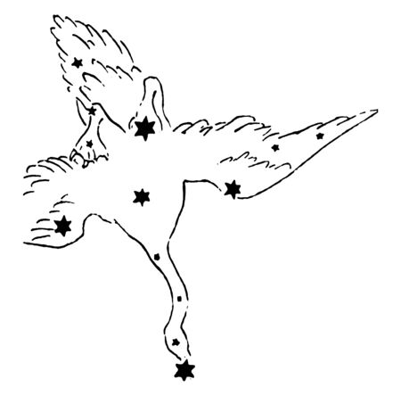 Cygnus is a northern star grouping lying on the plane of the Milky Way, getting its name from the Latinized Greek word for swan, vintage line drawing or engraving illustration.