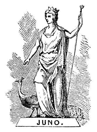 A statue of Juno, who is ancient roman goddess as well as the protector and special counsellor of the state, vintage line drawing or engraving illustration.