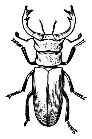 Stag Beetle is the largest European species, vintage line drawing or engraving illustration. Foto de archivo - 133035020