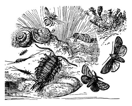 Various Types of Seashore Life habitats exist from the Tropics to the Arctic and Antarctic, vintage line drawing or engraving illustration. Ilustracja