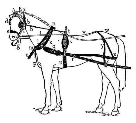 Harness for a horse drawn carriage with pieces labeled, vintage line drawing or engraving illustration.