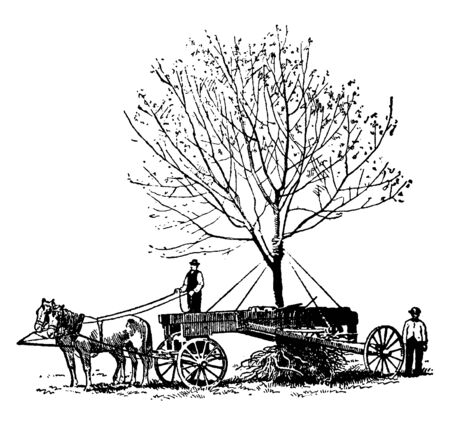 This is industry leading techniques for tree relocation. This involves lifting an existing tree from one location and transporting it to another before successfully replanting, vintage line drawing or engraving illustration.