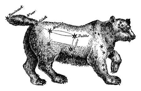 Ursa Major or Great Bear or Big Dipper heavenly body, vintage line drawing or engraving illustration. Çizim
