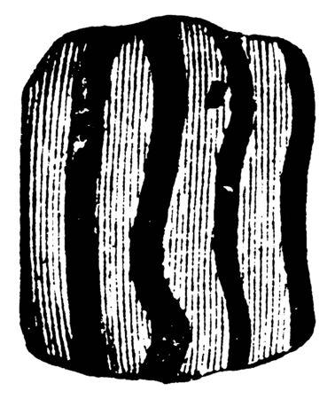 This illustration represents Grape Vine Butterfly Larva, vintage line drawing or engraving illustration.