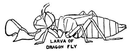 Dragonfly is an insect belonging to the order Odonata, vintage line drawing or engraving illustration. Ilustração