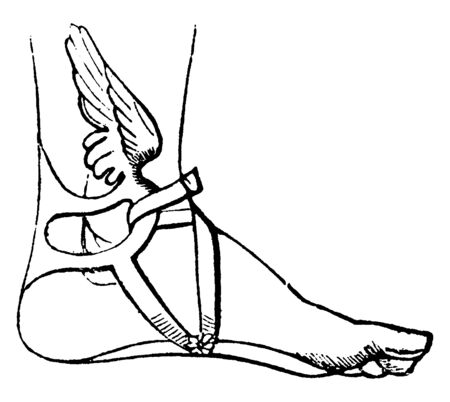 Talaria, the small wings fixed to the ankles of Mercury. In many ancient works of art they are represented depicting that they grew from their ankles as if they were a part of their body frame, vintage line drawing or engraving illustration.