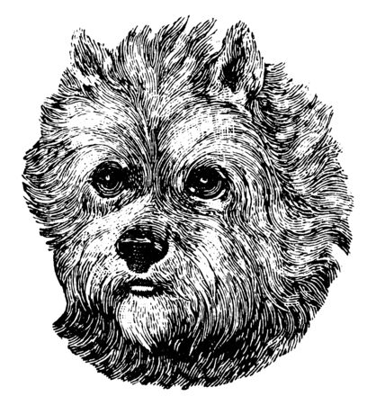 Scottish Terrier is a breed of dog and initially one of the highland breeds of terrier that were grouped under the name of Skye Terrier, vintage line drawing or engraving illustration. 向量圖像