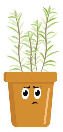 Rosemary in pot, illustration, vector on white background. Illustration